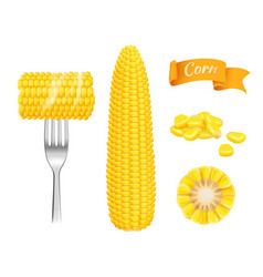 Corn realistic harvest fresh cut grains eating vector