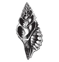 Univalve shell vintage vector