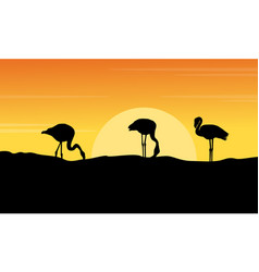 at sunset flamingo landscape silhouettes vector image vector image