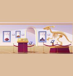 Historical museum interior with dinosaur skeleton vector