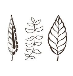 Leaves decoration interior nature design vector