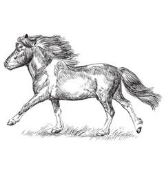 hand drawing image pony galloping vector image