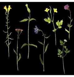 set of watercolor drawing plants vector image vector image