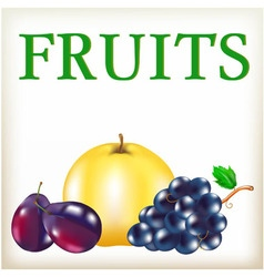 Fruit of yellow and violet color ripe blue plums vector image
