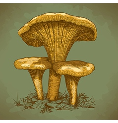 engraving three mushrooms retro vector image vector image