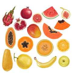 Colorful rainbow exotic juicy delicious fruits vector