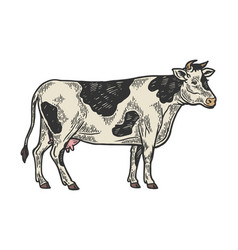 cow rural farm animal engraving vector image