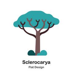 Sclerocarya flat icon vector