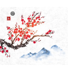 cherry sakura tree branch in blossom and far blue vector image