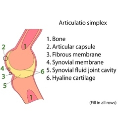 Simplex joint Anatomical atlas vector image