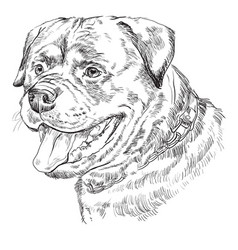 Rottweiler hand drawing portrait vector