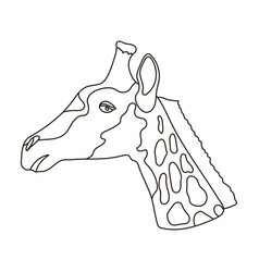 giraffe icon in outline style isolated on white vector image