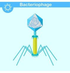 Bacteriophage - bacterial dna virus vector