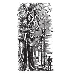 Banyan tree vintage vector