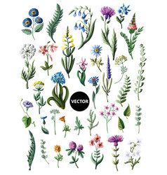 Big set of wild flowers isolated vector