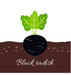 Black radish icon with title vector