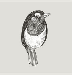 Graphic hand drawn robin bird on retro vector