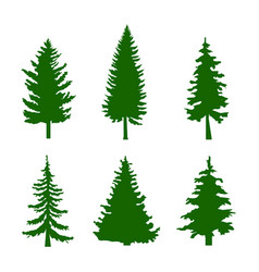 Set of green silhouettes of pine trees on white vector