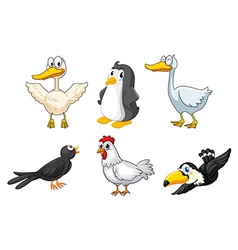 Different kinds of birds vector image
