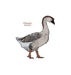 hand drawn goose isolated engraved style vector image