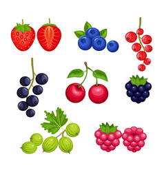 Set fresh berries vector
