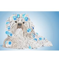 Shih tzu dog vector