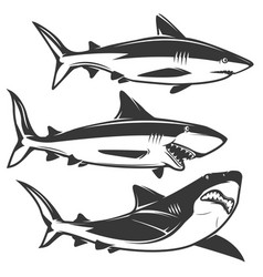 set of shark icons isolated on white background vector image vector image