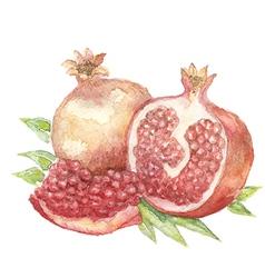 Vegetable vitamin painting watercolor vector