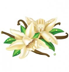vector vanilla flowers vector image vector image