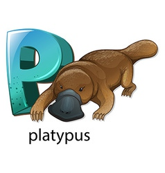 A letter P for platypus vector