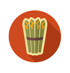 Asparagus flat icon vegetable vector