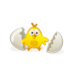 cute newborn chicken in egg broken vector image