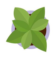 Plant pot cartoon vector