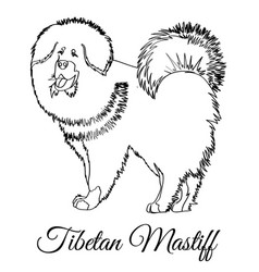 Tibetan mastiff dog coloring vector
