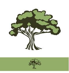 big oak tree vector image