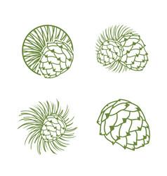 fir cone logo set vector image