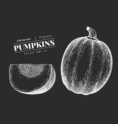 Pumpkin hand drawn vegetable on chalk board vector