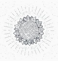 Sunflower sketch vintage label hand drawn grunge vector