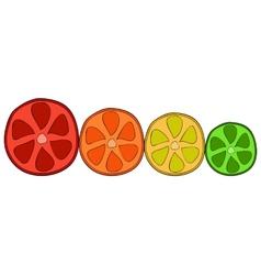 Doodle citrus slices vector image