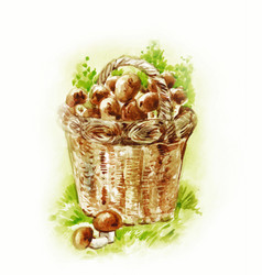 basket with mushrooms watercolor painting in vector image