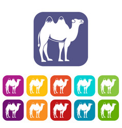 Camel icons set vector