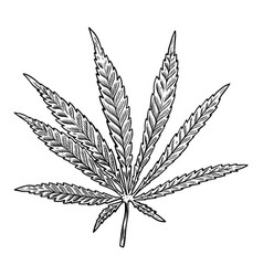 cannabis leaf isolated on white background design vector image