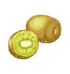 ripe kiwi and slice vector image