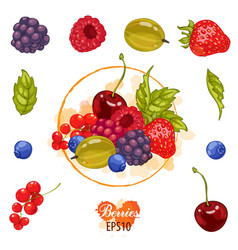 set berry on a white background vector image