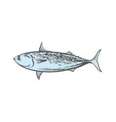 Sketch tuna fish underwater animal sea food vector