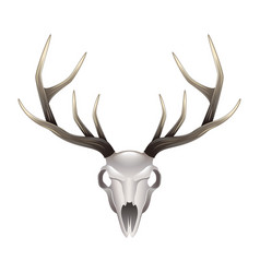 Deer skull front view isolated vector