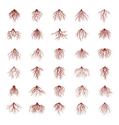 big set of brown roots vector image