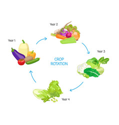 Crop rotation seasonal cycle agricultural practice vector