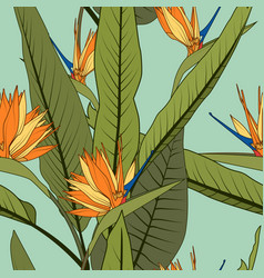 exotic orange strelitzia bird paradise flowers vector image