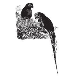 Parrots vintage vector
